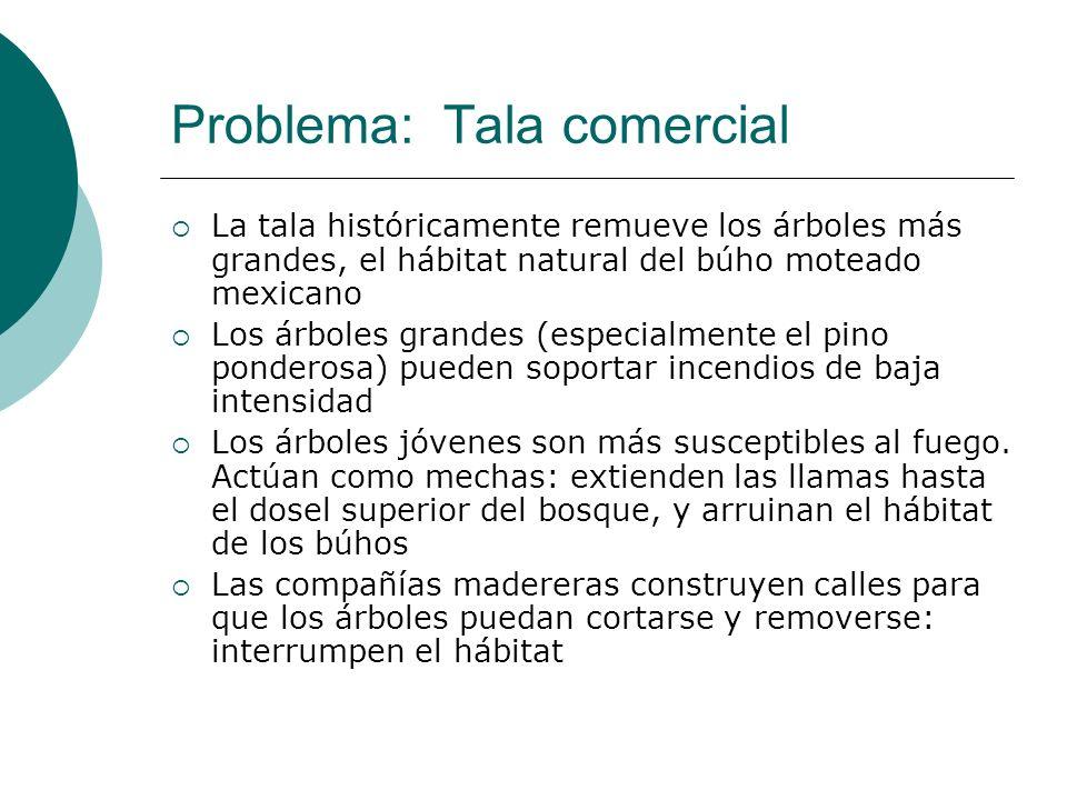 Problema: Tala comercial La tala históricamente remueve los árboles más grandes, el hábitat natural del búho moteado mexicano Los árboles grandes (esp