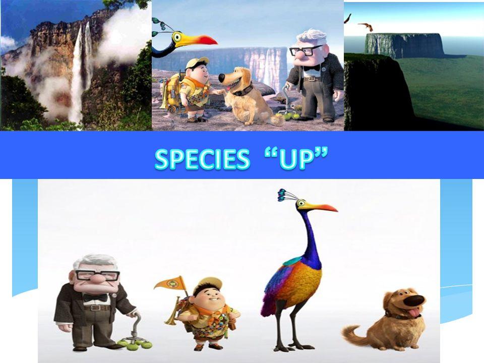 CARL y RUSSEL; Homo sapiens sapiens BLUE AND YELLOW MACAW: Ara Arauna KEVIN: Lophophorus impejanus DUG: Canis familiaris In order of apparition: