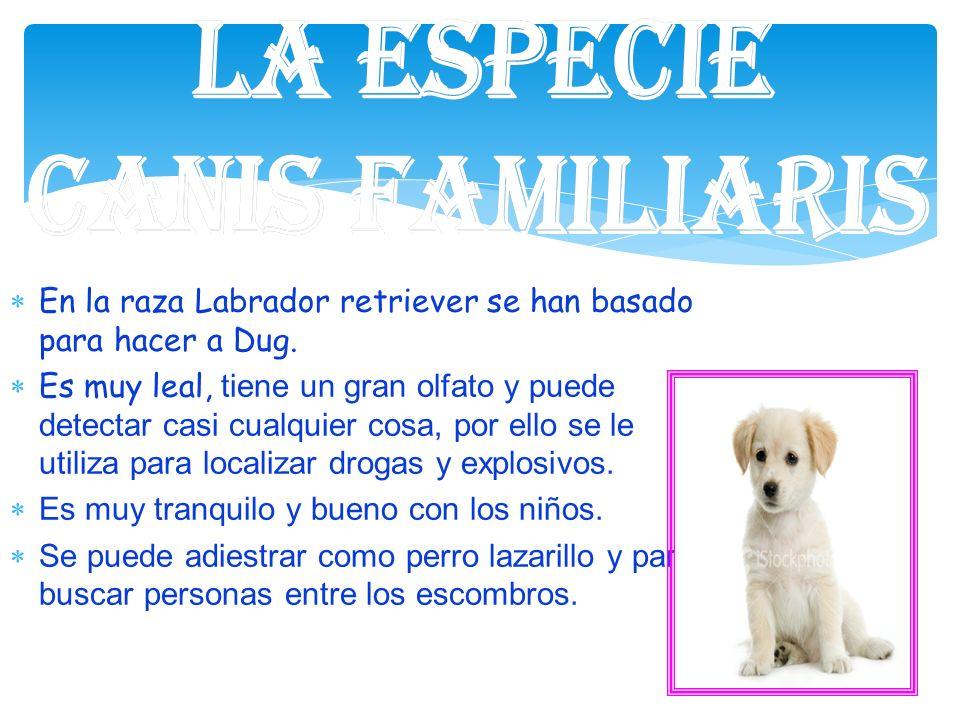 En la raza Labrador retriever se han basado para hacer a Dug. Es muy leal, tiene un gran olfato y puede detectar casi cualquier cosa, por ello se le u