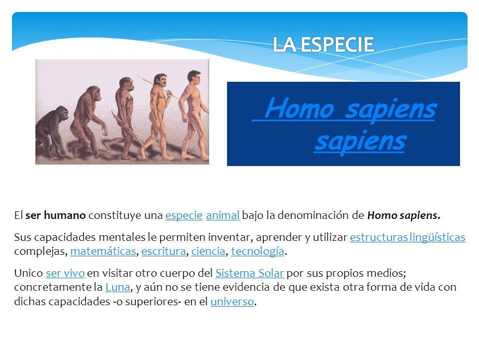 Homo sapiens sapiens El ser humano constituye una especie animal bajo la denominación de Homo sapiens.especieanimal Sus capacidades mentales le permit