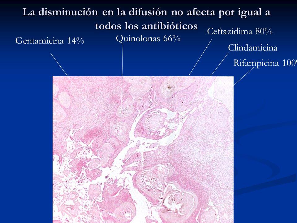 Gentamicina 14% Quinolonas 66% Ceftazidima 80% Rifampicina 100% Clindamicina La disminución en la difusión no afecta por igual a todos los antibiótico