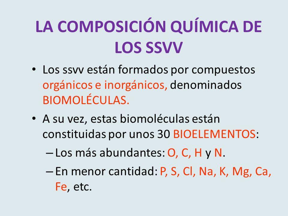 LA COMPOSICIÓN QUÍMICA DE LOS SSVV Los ssvv están formados por compuestos orgánicos e inorgánicos, denominados BIOMOLÉCULAS. A su vez, estas biomolécu