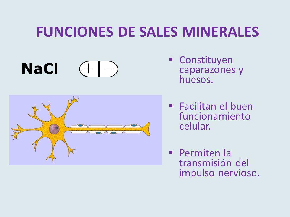 FUNCIONES DE SALES MINERALES Constituyen caparazones y huesos. Facilitan el buen funcionamiento celular. Permiten la transmisión del impulso nervioso.