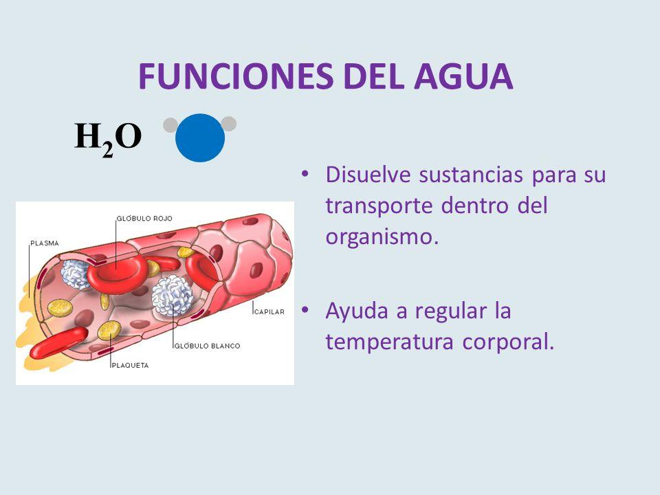 FUNCIONES DEL AGUA Disuelve sustancias para su transporte dentro del organismo. Ayuda a regular la temperatura corporal. H2OH2O