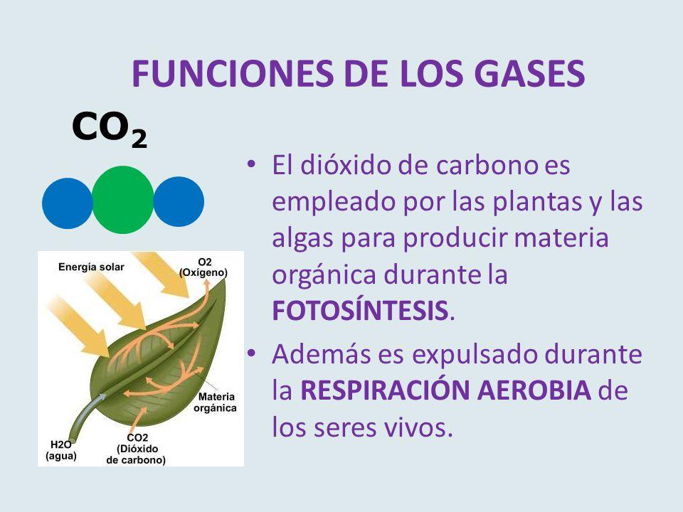 FUNCIONES DE LOS GASES El dióxido de carbono es empleado por las plantas y las algas para producir materia orgánica durante la FOTOSÍNTESIS. Además es