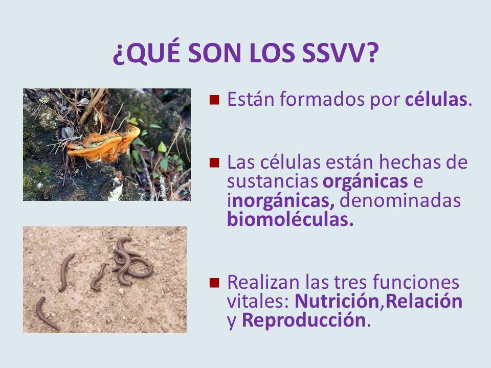 ¿QUÉ SON LOS SSVV? Están formados por células. Las células están hechas de sustancias orgánicas e inorgánicas, denominadas biomoléculas. Realizan las