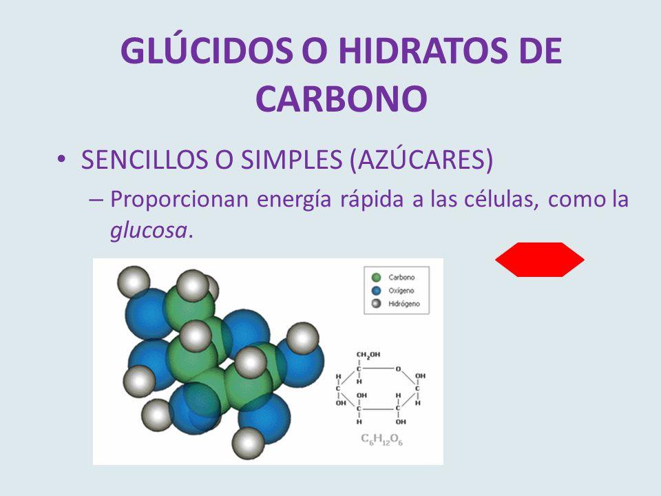 GLÚCIDOS O HIDRATOS DE CARBONO SENCILLOS O SIMPLES (AZÚCARES) – Proporcionan energía rápida a las células, como la glucosa.