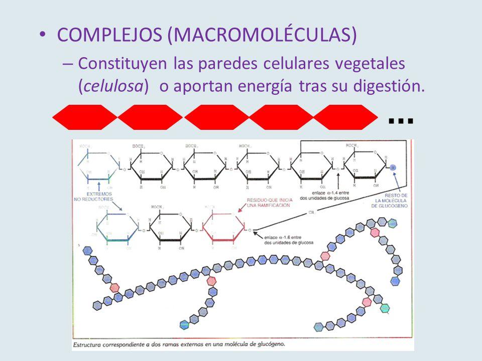 COMPLEJOS (MACROMOLÉCULAS) – Constituyen las paredes celulares vegetales (celulosa) o aportan energía tras su digestión....