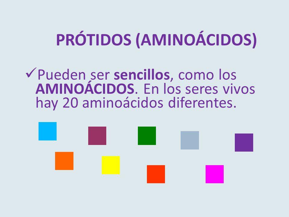 PRÓTIDOS (AMINOÁCIDOS) Pueden ser sencillos, como los AMINOÁCIDOS. En los seres vivos hay 20 aminoácidos diferentes.