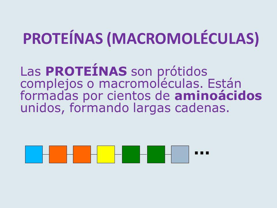 PROTEÍNAS (MACROMOLÉCULAS) Las PROTEÍNAS son prótidos complejos o macromoléculas. Están formadas por cientos de aminoácidos unidos, formando largas ca