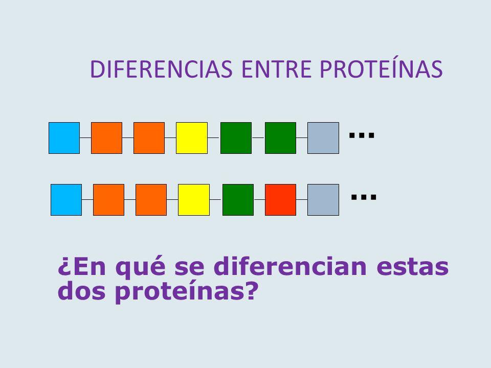 DIFERENCIAS ENTRE PROTEÍNAS ¿En qué se diferencian estas dos proteínas?...