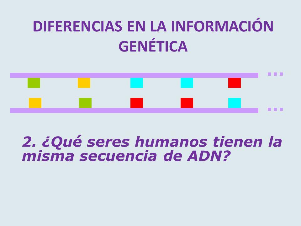 DIFERENCIAS EN LA INFORMACIÓN GENÉTICA... 2. ¿Qué seres humanos tienen la misma secuencia de ADN?