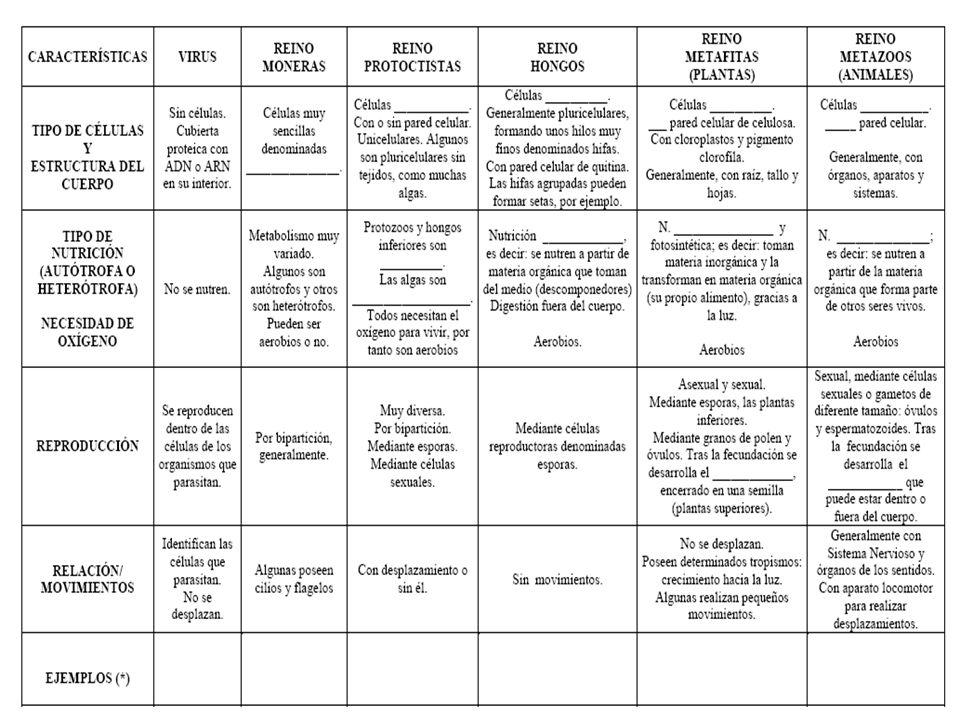 ÓRGANOS SISTEMAS Y APARATOS ORGANISMO LOS NIVELES DE ORGANIZACIÓN DE LOS SSVV TEJIDOS
