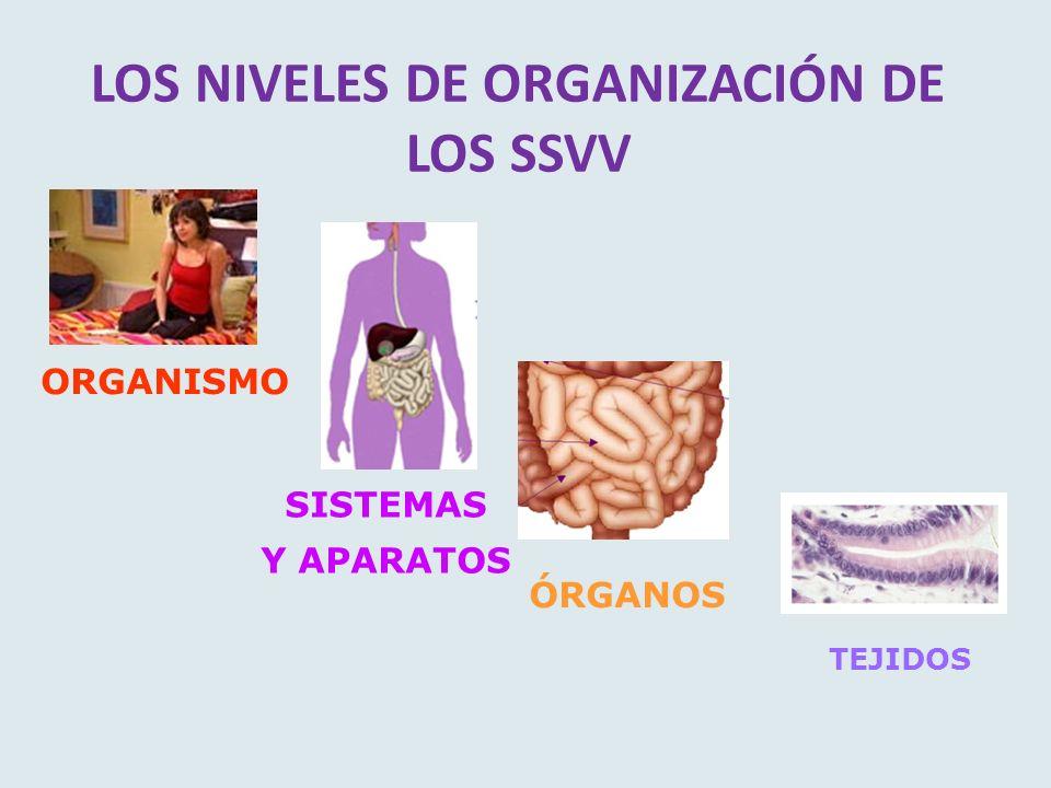 FUNCIONES DE SALES MINERALES Constituyen caparazones y huesos.