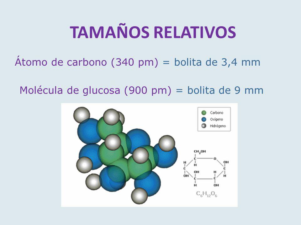 TAMAÑOS RELATIVOS Átomo de carbono (340 pm) = bolita de 3,4 mm Molécula de glucosa (900 pm) = bolita de 9 mm