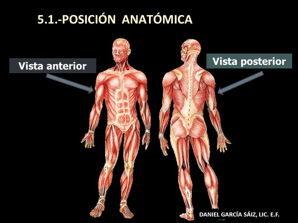 5.1.-POSICIÓN ANATÓMICA Vista anterior Vista posterior DANIEL GARCÍA SÁIZ, LIC. E.F.