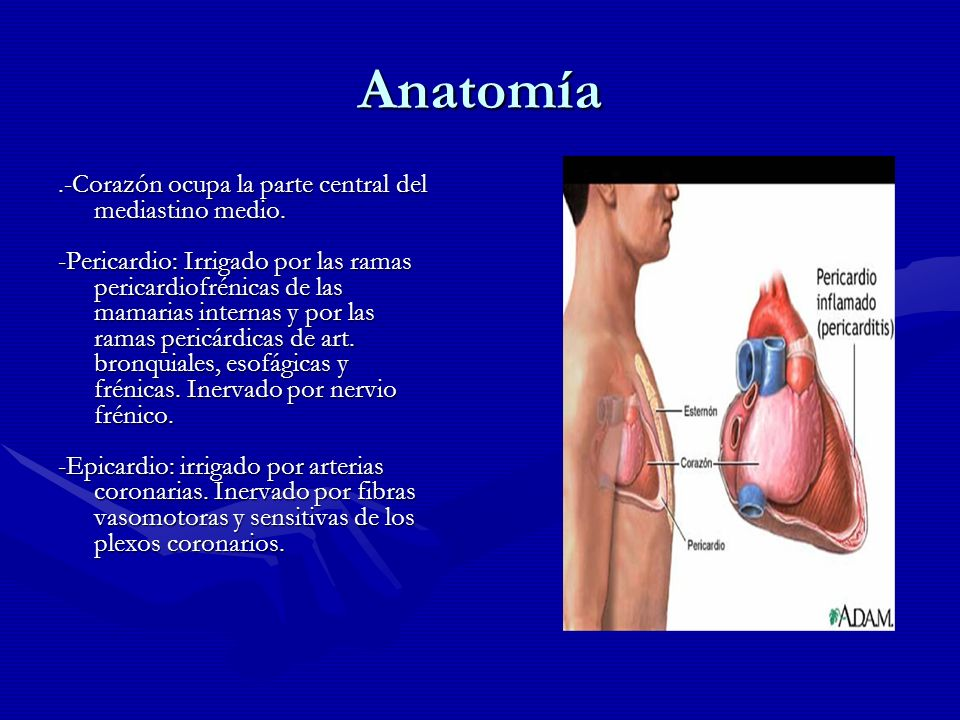 Anatomía.-Corazón ocupa la parte central del mediastino medio. -Pericardio: Irrigado por las ramas pericardiofrénicas de las mamarias internas y por l