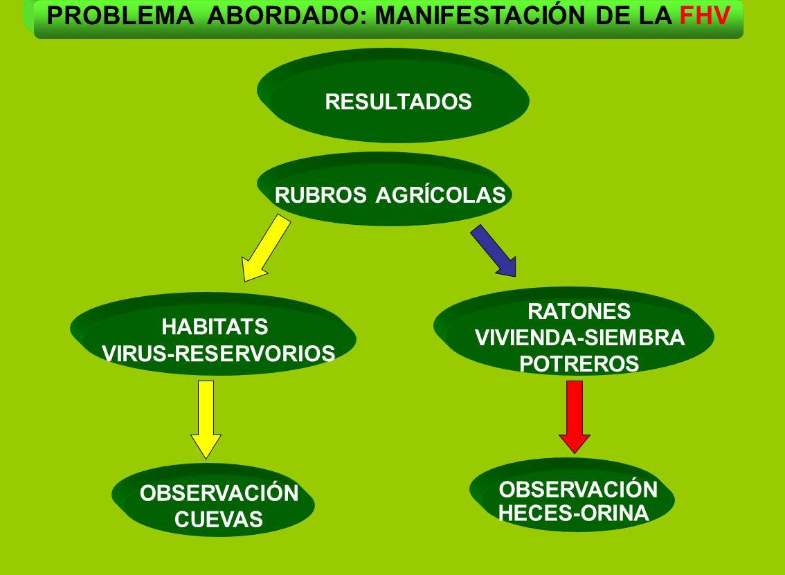 HABITATS VIRUS-RESERVORIOS RATONES VIVIENDA-SIEMBRA POTREROS OBSERVACIÓN HECES-ORINA OBSERVACIÓN CUEVAS RESULTADOS RUBROS AGRÍCOLAS PROBLEMA ABORDADO: