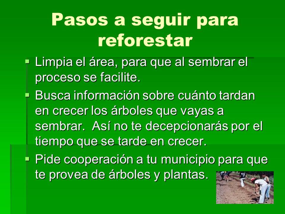 Pasos a seguir para reforestar Limpia el área, para que al sembrar el proceso se facilite. Limpia el área, para que al sembrar el proceso se facilite.