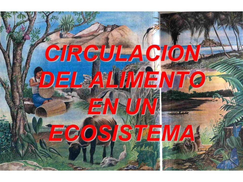 CIRCULACION DEL ALIMENTO EN UN ECOSISTEMA