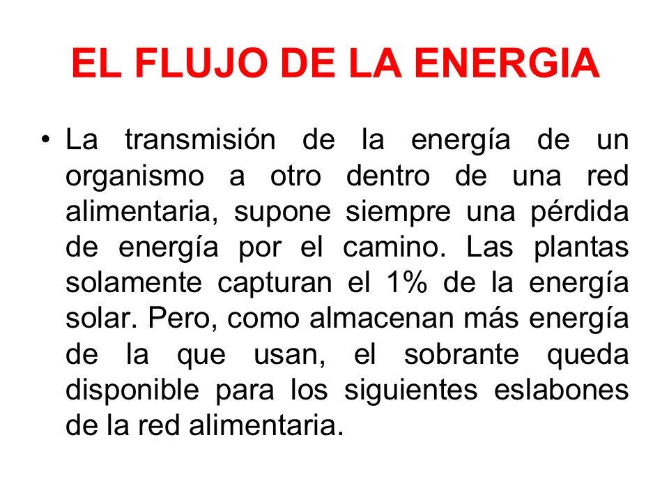 EL FLUJO DE LA ENERGIA La transmisión de la energía de un organismo a otro dentro de una red alimentaria, supone siempre una pérdida de energía por el