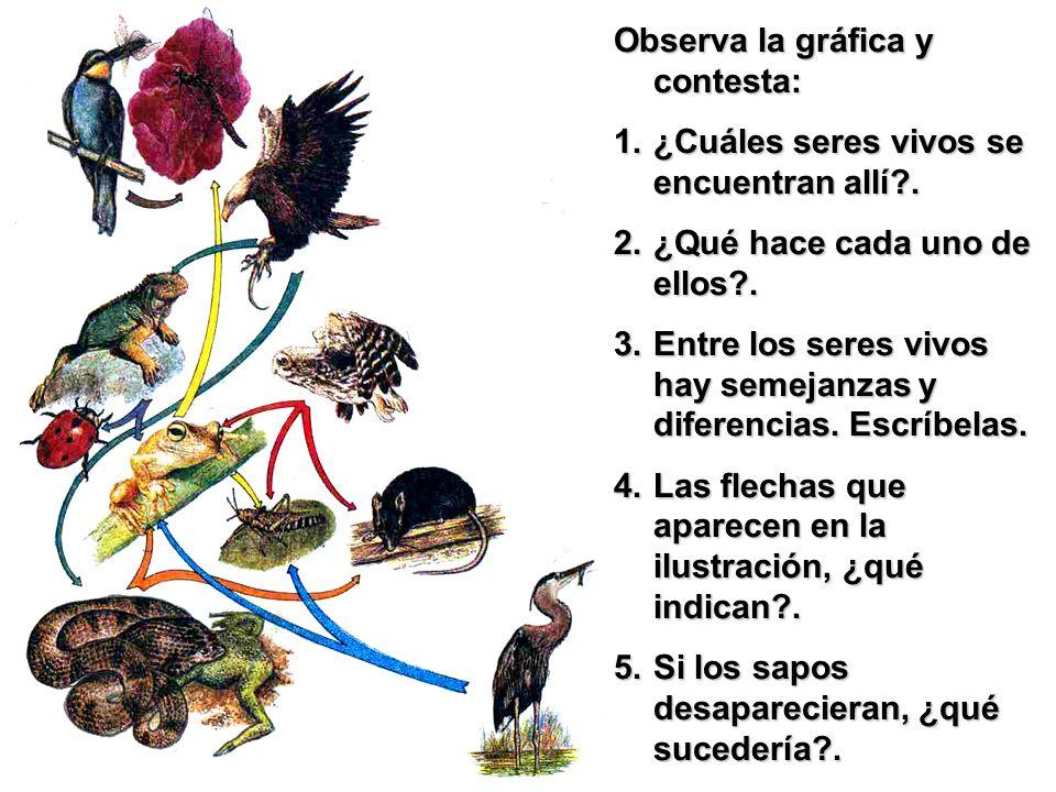 Observa la gráfica y contesta: 1.¿Cuáles seres vivos se encuentran allí?. 2.¿Qué hace cada uno de ellos?. 3.Entre los seres vivos hay semejanzas y dif