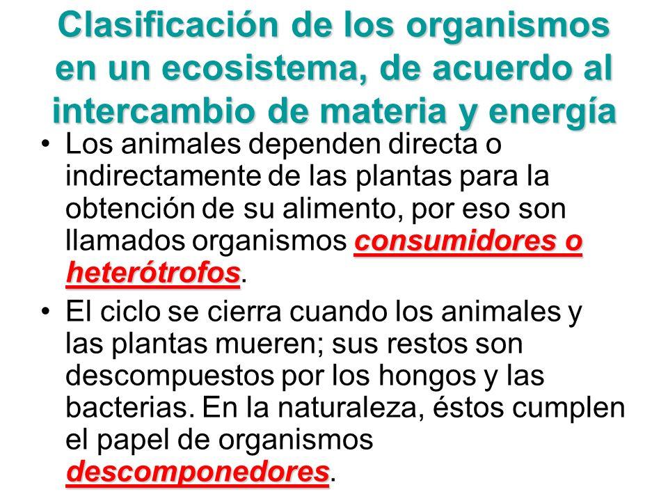 Clasificación de los organismos en un ecosistema, de acuerdo al intercambio de materia y energía consumidores o heterótrofosLos animales dependen dire