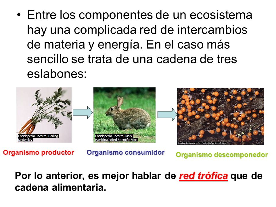 Entre los componentes de un ecosistema hay una complicada red de intercambios de materia y energía. En el caso más sencillo se trata de una cadena de