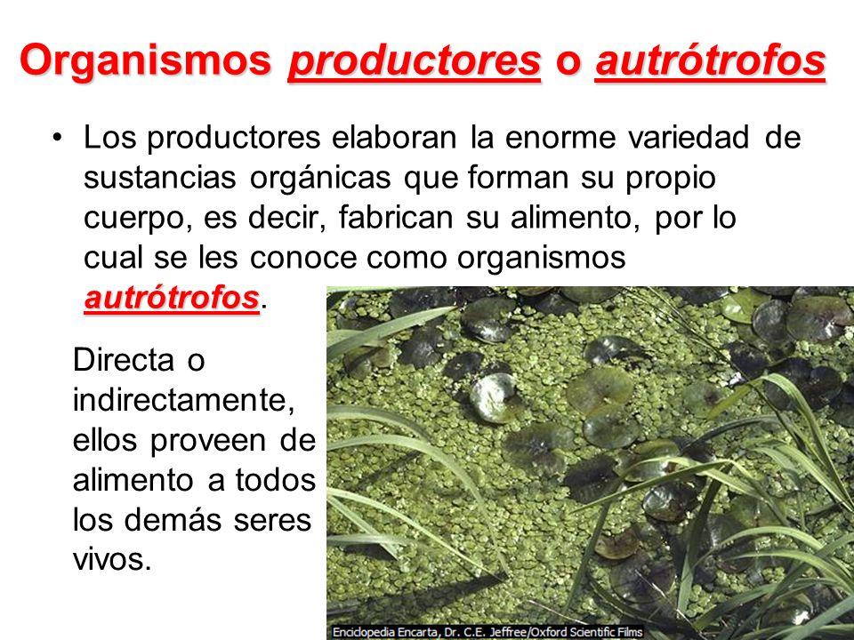 Organismos productores o autrótrofos autrótrofosLos productores elaboran la enorme variedad de sustancias orgánicas que forman su propio cuerpo, es de