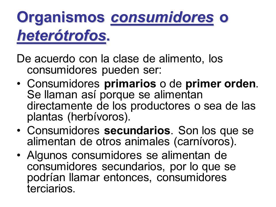 Organismos consumidores o heterótrofos. De acuerdo con la clase de alimento, los consumidores pueden ser: Consumidores primarios o de primer orden. Se