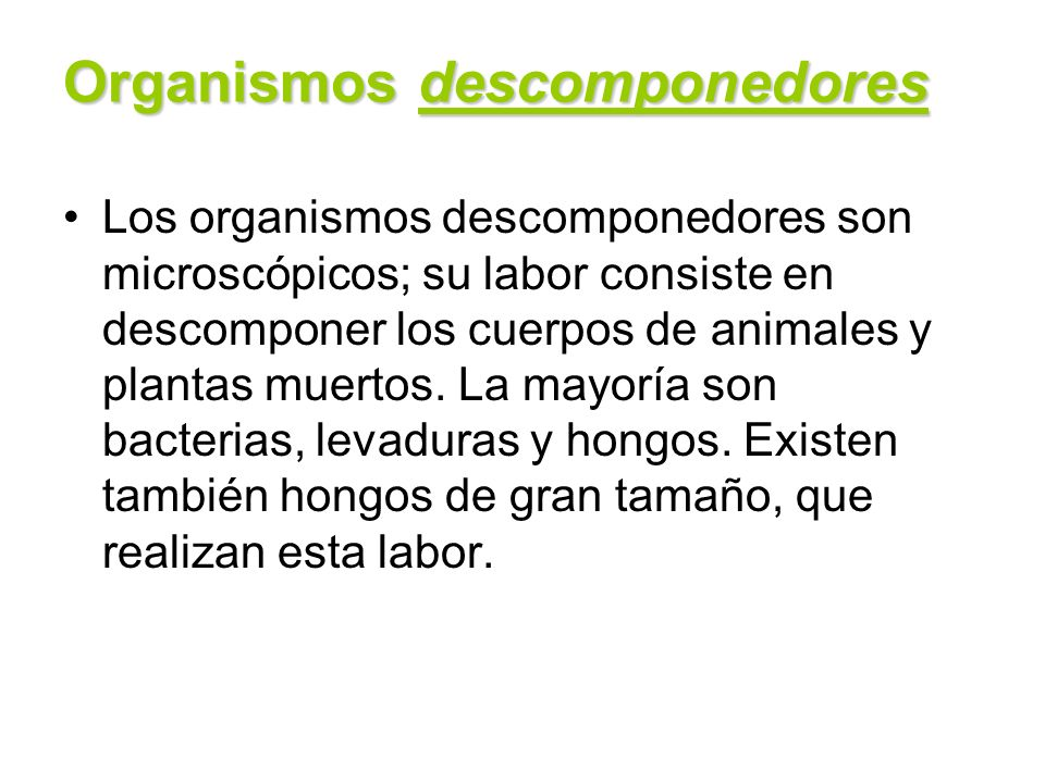 Organismos descomponedores Los organismos descomponedores son microscópicos; su labor consiste en descomponer los cuerpos de animales y plantas muerto