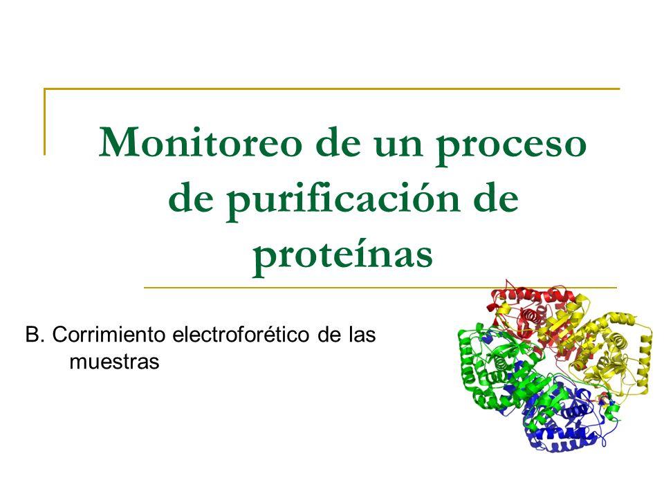 Monitoreo de un proceso de purificación de proteínas B. Corrimiento electroforético de las muestras
