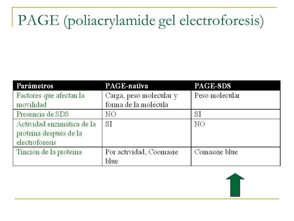 PAGE (poliacrylamide gel electroforesis)