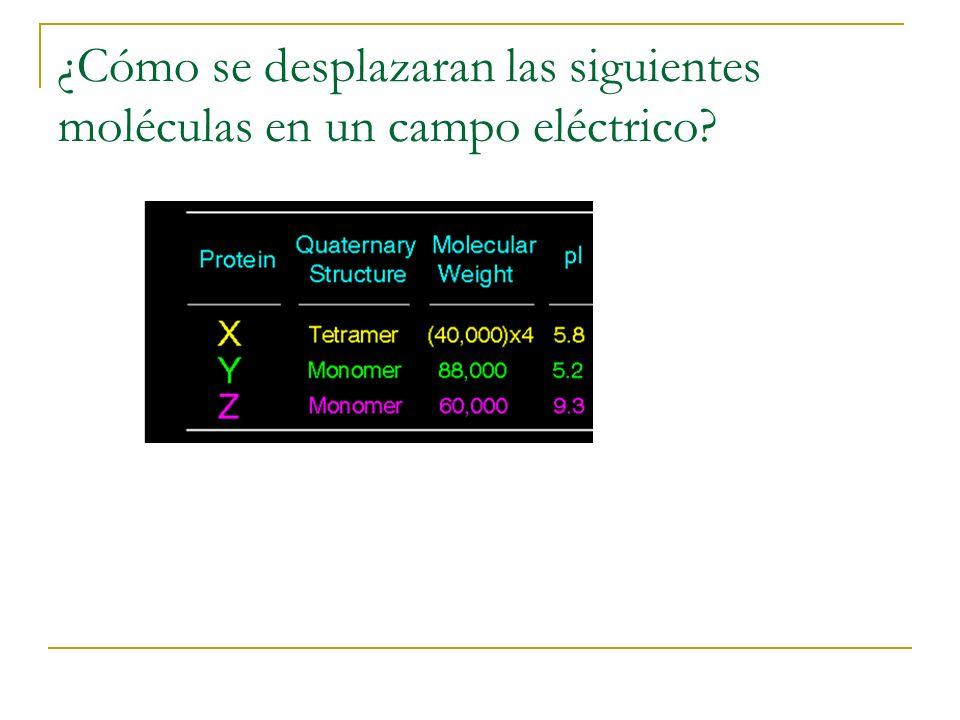 ¿Cómo se desplazaran las siguientes moléculas en un campo eléctrico?