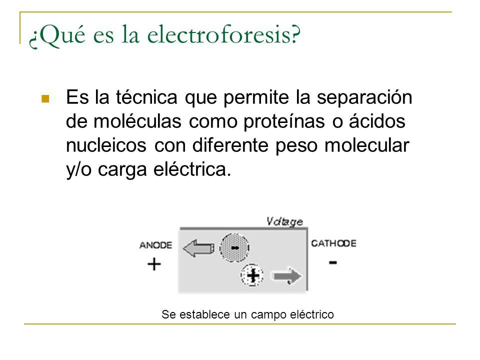 ¿Qué es la electroforesis? Es la técnica que permite la separación de moléculas como proteínas o ácidos nucleicos con diferente peso molecular y/o car