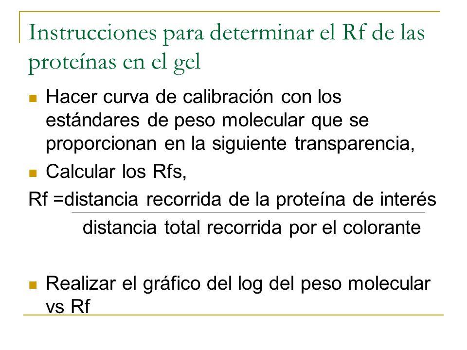 Instrucciones para determinar el Rf de las proteínas en el gel Hacer curva de calibración con los estándares de peso molecular que se proporcionan en