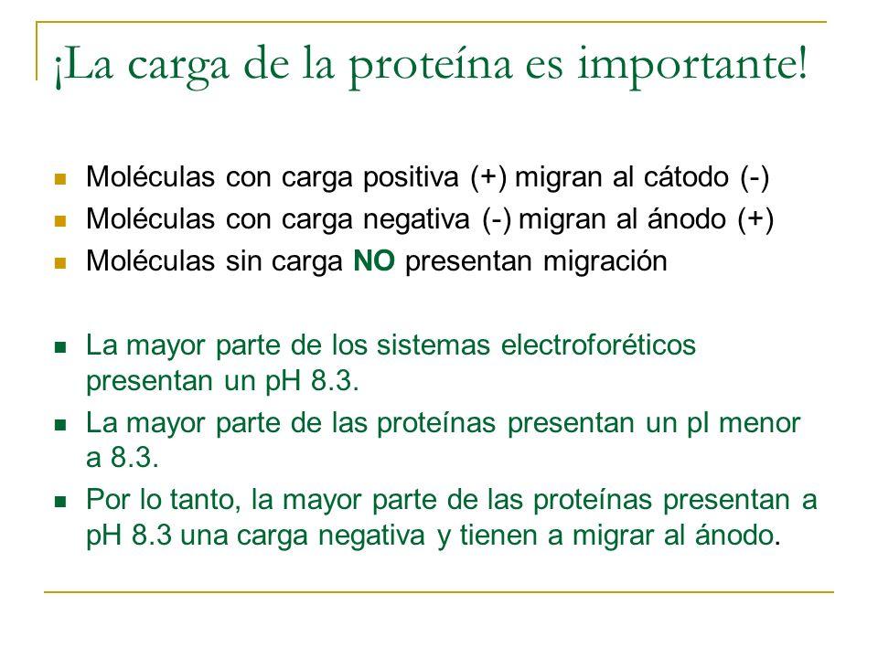 ¡La carga de la proteína es importante! Moléculas con carga positiva (+) migran al cátodo (-) Moléculas con carga negativa (-) migran al ánodo (+) Mol