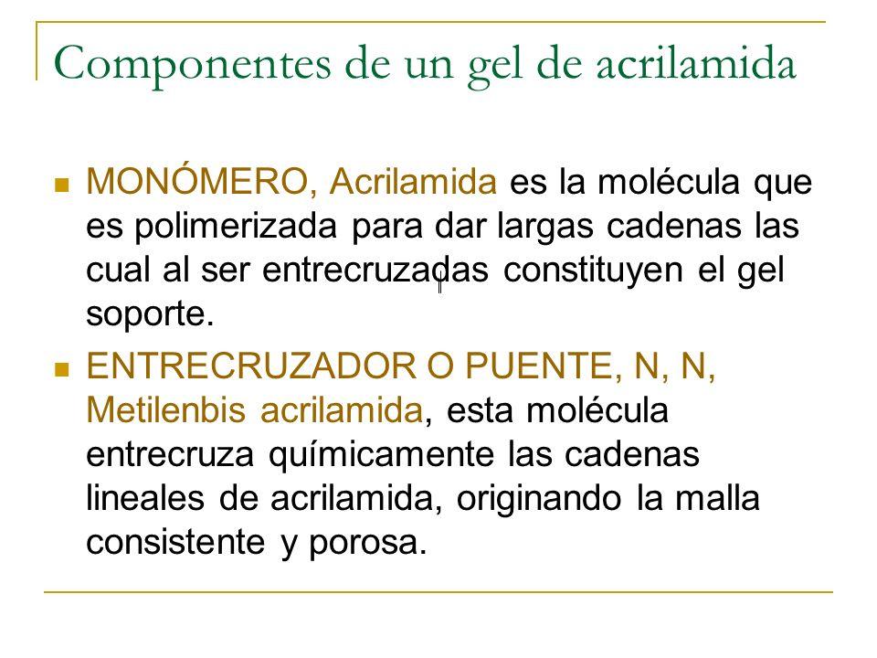 Componentes de un gel de acrilamida MONÓMERO, Acrilamida es la molécula que es polimerizada para dar largas cadenas las cual al ser entrecruzadas cons
