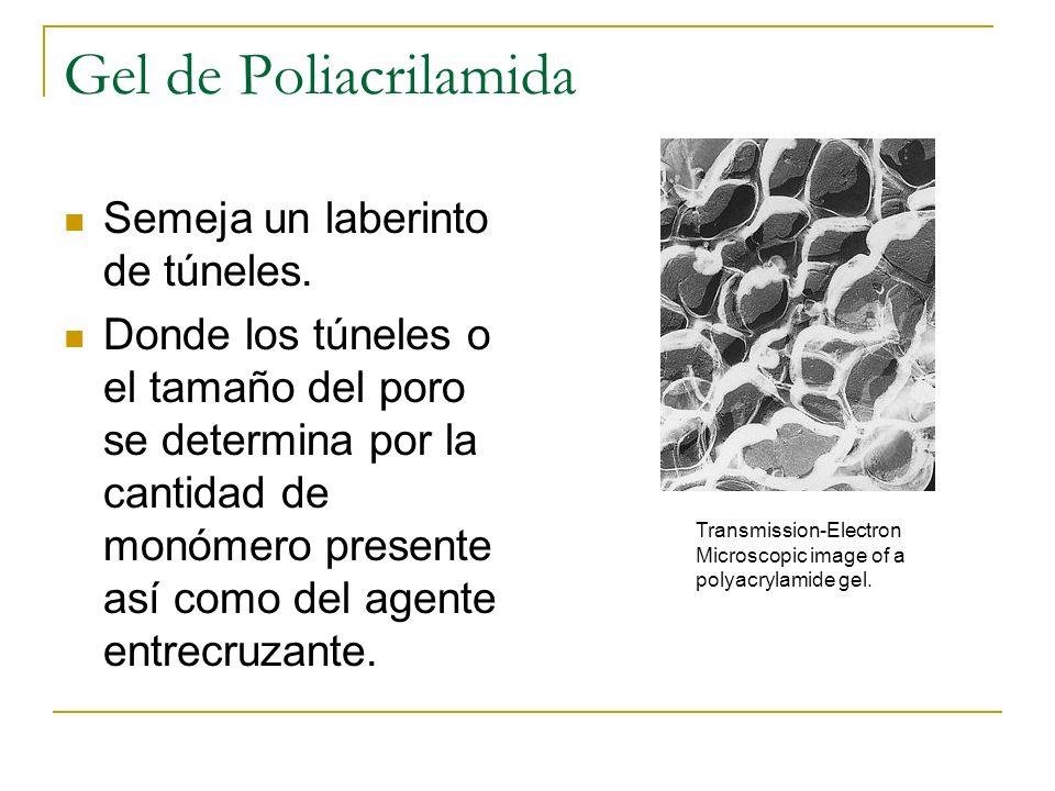 Gel de Poliacrilamida Semeja un laberinto de túneles. Donde los túneles o el tamaño del poro se determina por la cantidad de monómero presente así com