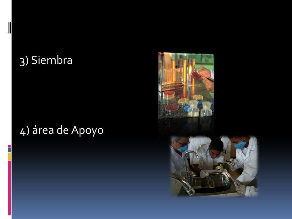 3) Siembra 4) área de Apoyo