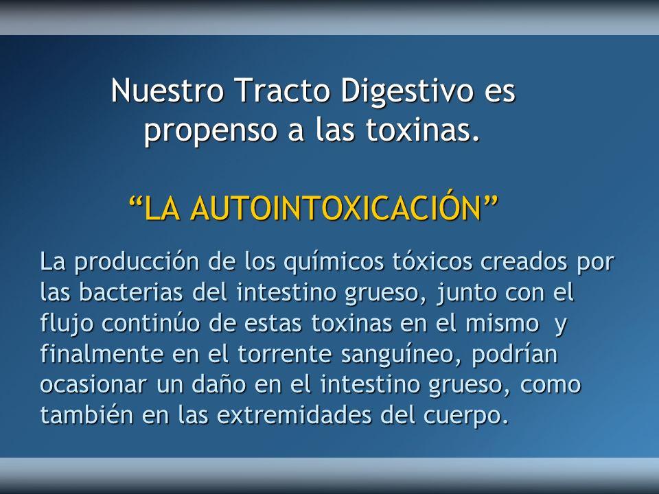 La producción de los químicos tóxicos creados por las bacterias del intestino grueso, junto con el flujo continúo de estas toxinas en el mismo y final