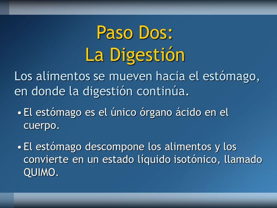 Los alimentos se mueven hacia el estómago, en donde la digestión continúa. El estómago es el único órgano ácido en el cuerpo.El estómago es el único ó