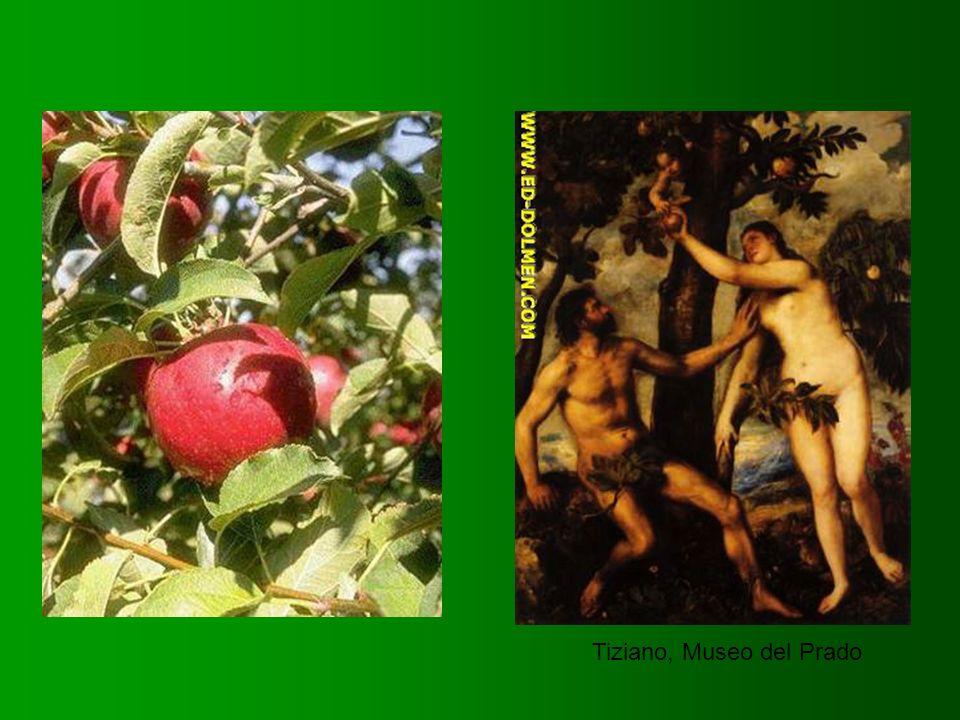 Tiziano, Museo del Prado