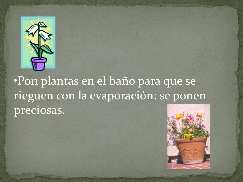 Pon plantas en el baño para que se rieguen con la evaporación: se ponen preciosas.