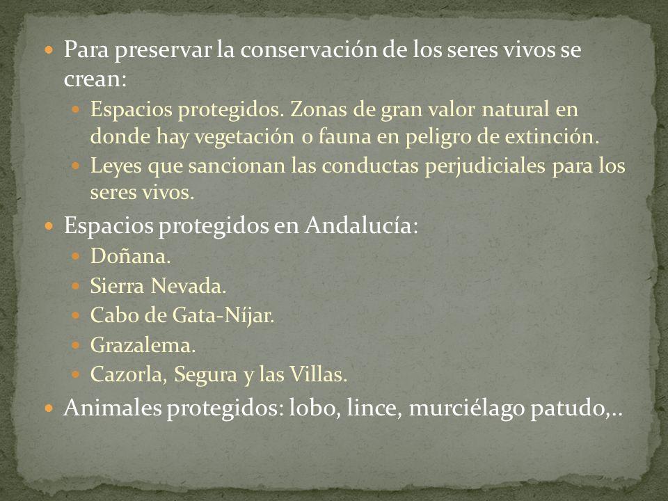 Para preservar la conservación de los seres vivos se crean: Espacios protegidos. Zonas de gran valor natural en donde hay vegetación o fauna en peligr