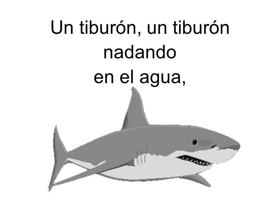 Un tiburón, un tiburón nadando en el agua,