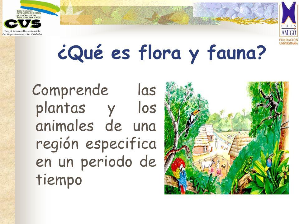 ¿Qué es flora y fauna? Comprende las plantas y los animales de una región especifica en un periodo de tiempo