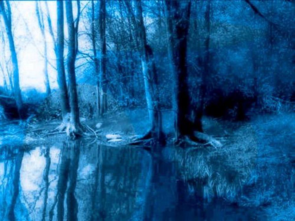 Cuando el rabino murió, la gente se dio cuenta de que nadie sabía las palabras que Baal Shem Tov decía cuando iban todos juntos a pedir algo...Pero conocían el lugar en el bosque.