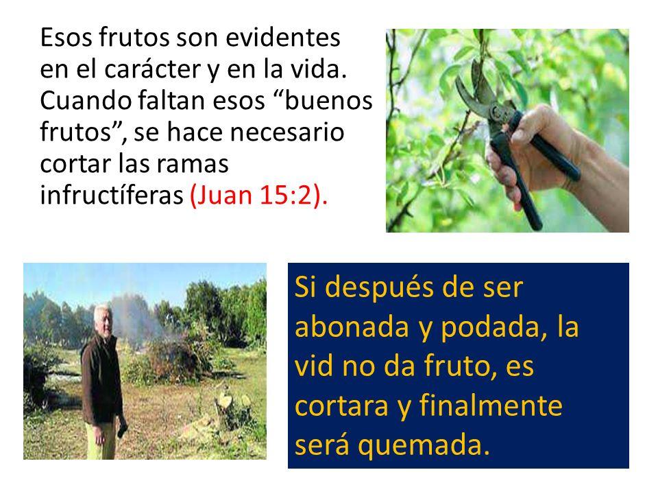 Esos frutos son evidentes en el carácter y en la vida. Cuando faltan esos buenos frutos, se hace necesario cortar las ramas infructíferas (Juan 15:2).