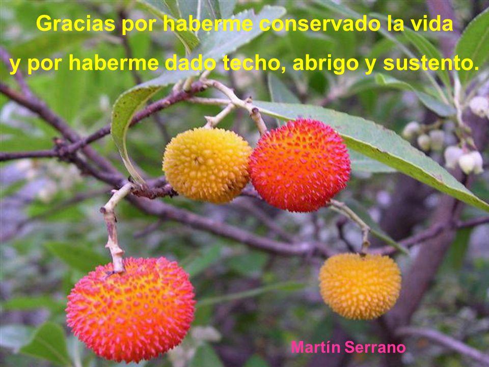 Gracias por haberme conservado la vida y por haberme dado techo, abrigo y sustento. Martín Serrano